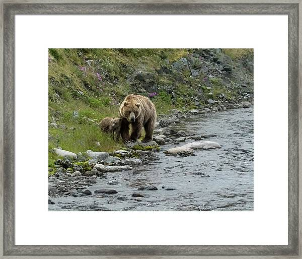 A Walk Along The Creek Framed Print