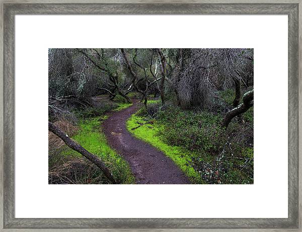 A Windy Path Framed Print