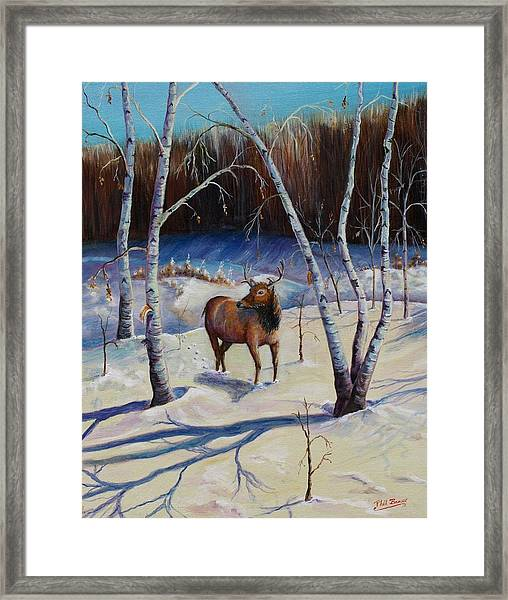 A Winter Morning Framed Print