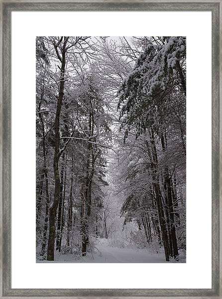 A Winters Path Framed Print
