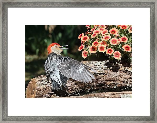 A Woodpecker Conversation Framed Print