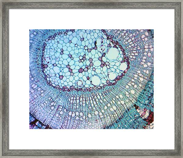 A Work Of Time Framed Print