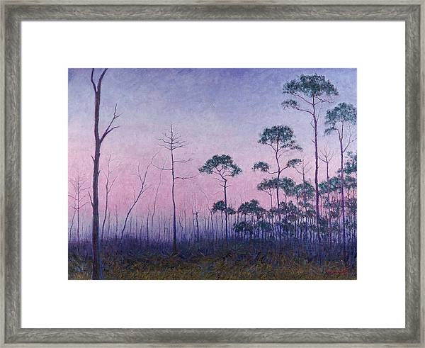 Abaco Pines At Dusk Framed Print