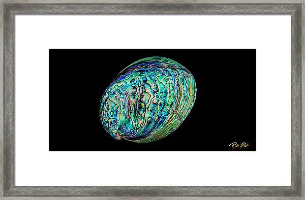 Abalone On Black Framed Print