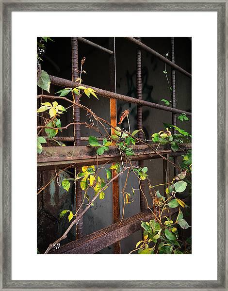 Abandoned Light Framed Print