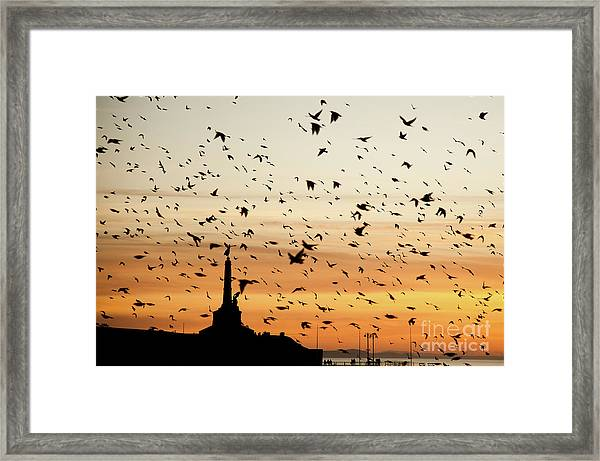 Aberystwyth Starlings At Dusk Flying Over The War Memorial Framed Print