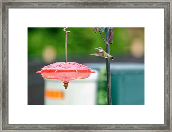 About To Land Framed Print