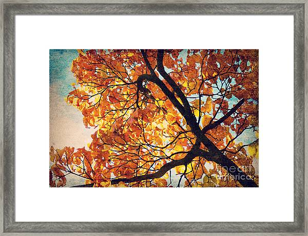 Abstract Autumn Impression Framed Print by Angela Doelling AD DESIGN Photo and PhotoArt