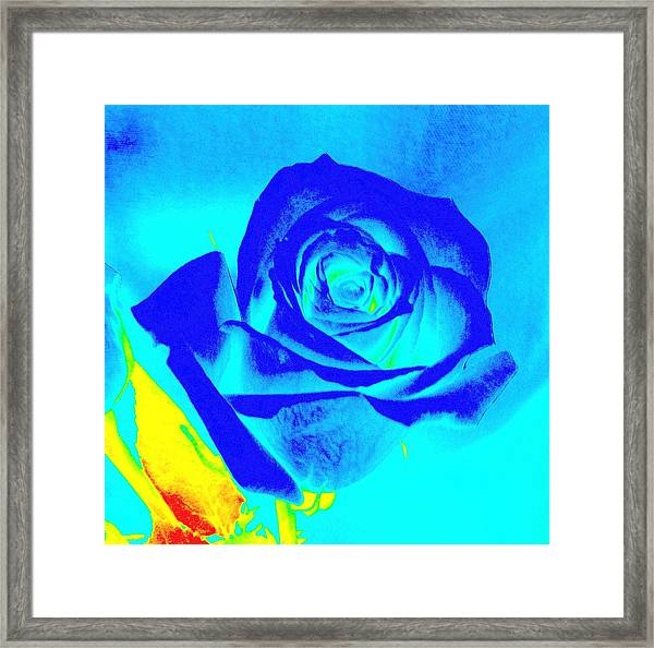 Single Blue Rose Abstract Framed Print