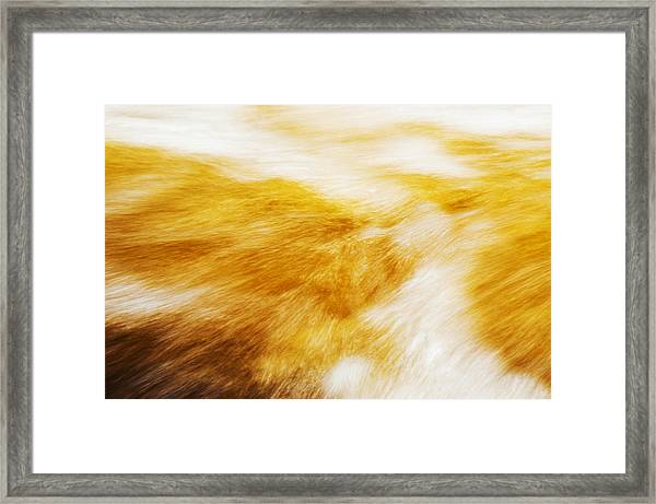 Abstract Flow Two Framed Print