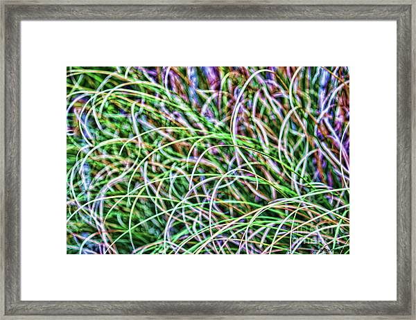 Abstract Grass Framed Print