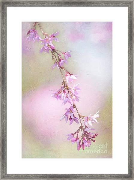 Abstract Higan Chery Blossom Branch Framed Print