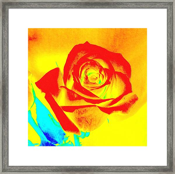 Single Orange Rose Abstract Framed Print