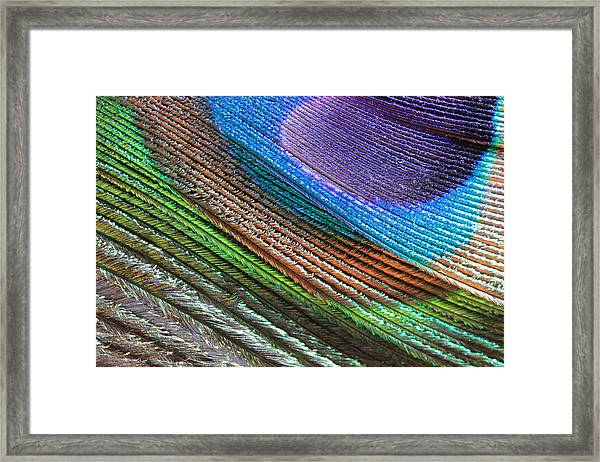 Abstract Peacock Feather Framed Print
