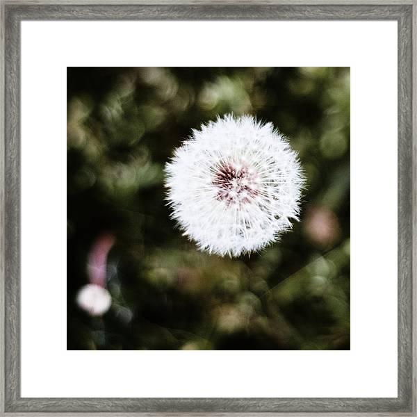 Abstract Seedhead - April 2014 Framed Print