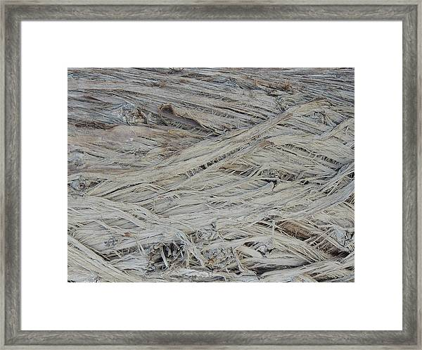 Abstract Tree Bark Framed Print
