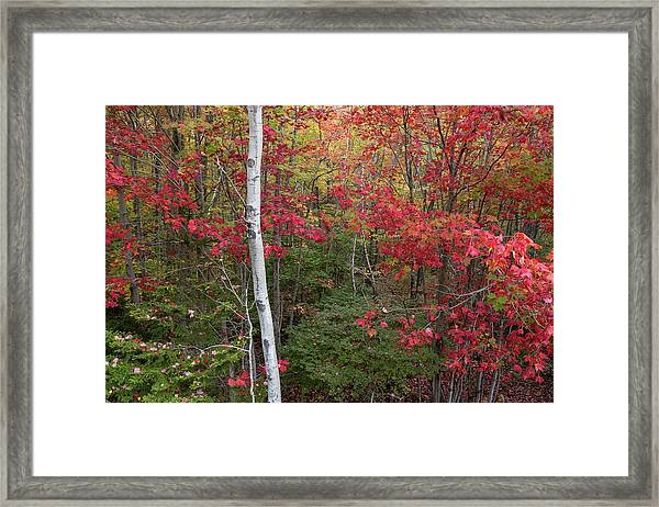 Acadia Fall Colors Framed Print