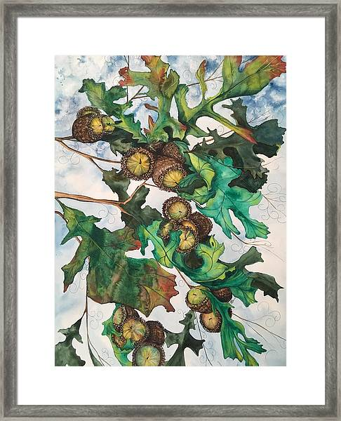 Acorns On An Oak  Framed Print