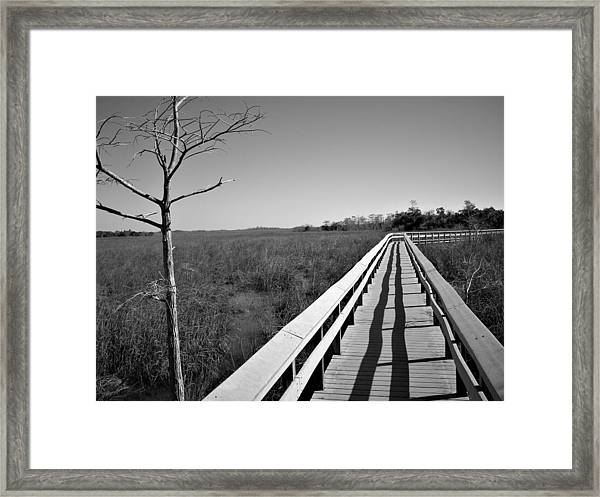 Across The Swamp Framed Print