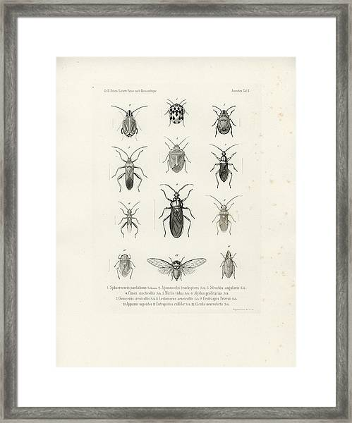 Framed Print featuring the drawing African Bugs And Insects by W Wagenschieber