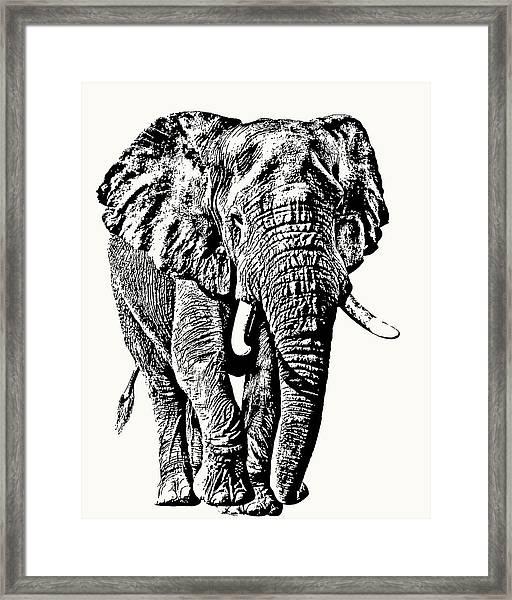 African Elephant Bull, Full Figure Framed Print