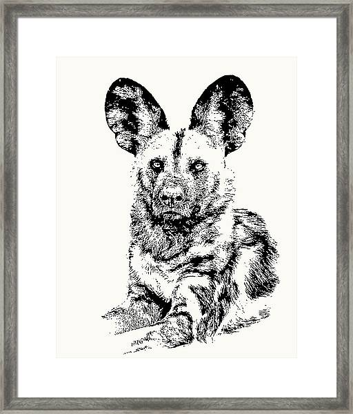 African Painted Dog Making Eye Contact Framed Print