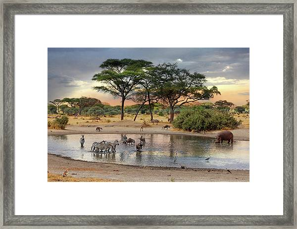 African Safari Wildlife At The Waterhole Framed Print