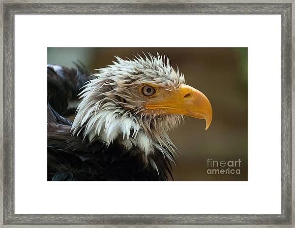 After A Bath Framed Print