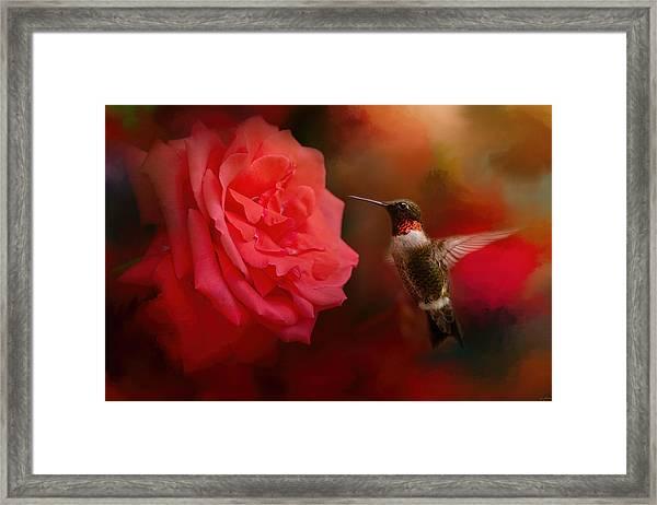 After The Big Rose Framed Print