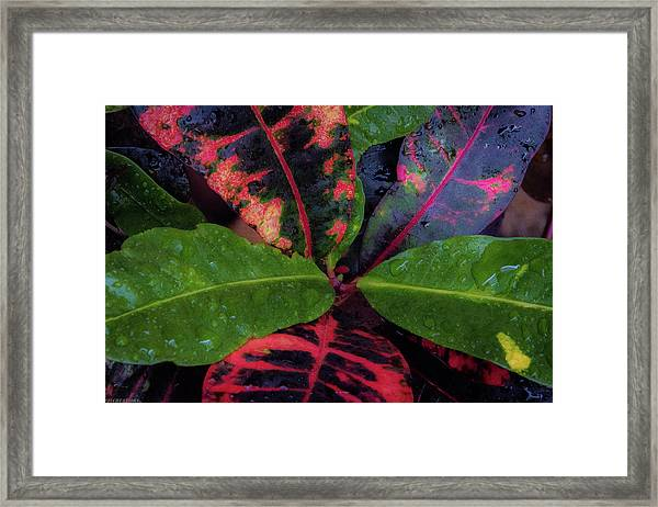 After The Rain Has Fallen Framed Print