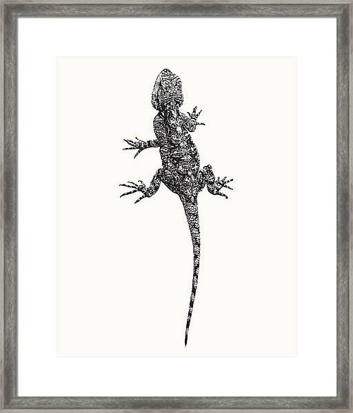 Agama Lizard In Graphic Monochrome Framed Print