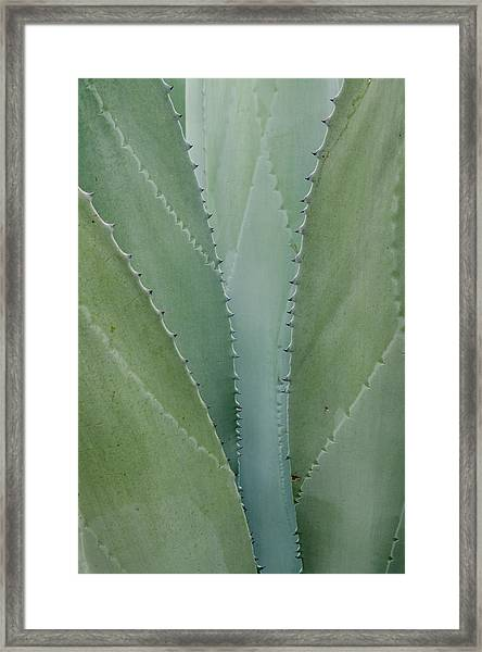 Agave Abstract. Framed Print