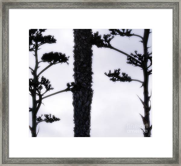 Agave And Palm Framed Print