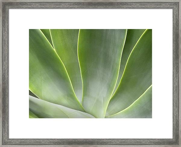 Agave Leaves Framed Print