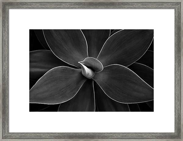 Agave Leaves Detail Framed Print