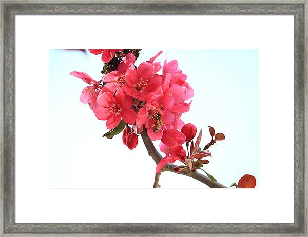 Ah The Beautiful Smell Framed Print