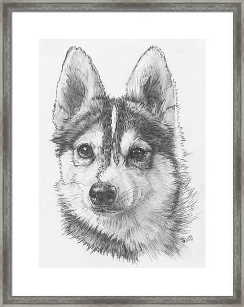 Alaskan Klee Kai Framed Print