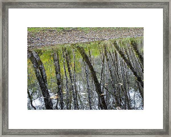 Alder Reflection Framed Print