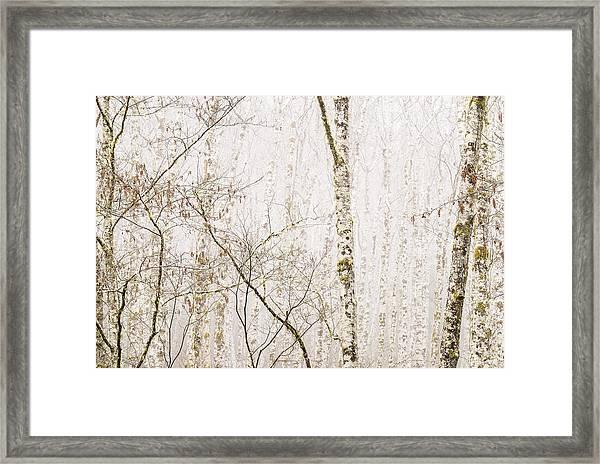 Alders In The Fog Framed Print