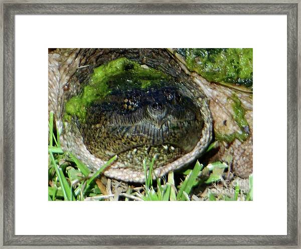 Algae Face Common Snapper Framed Print