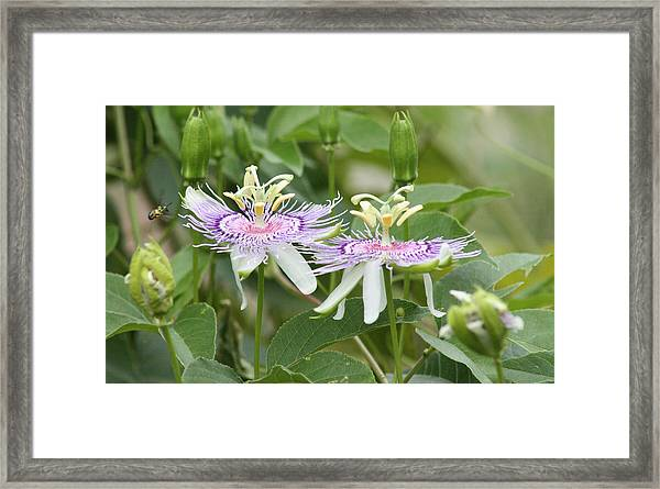 Alien Flower Framed Print