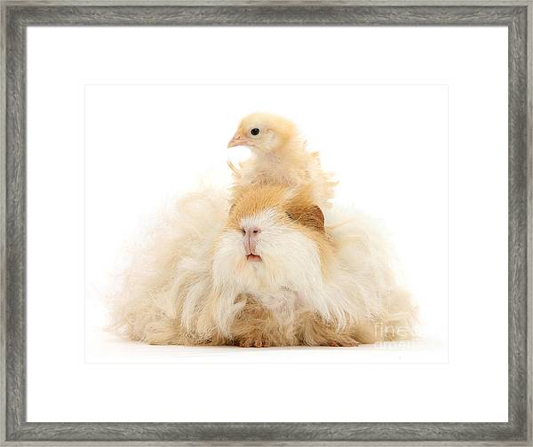 All Frizzed Up And Ready To Go Framed Print