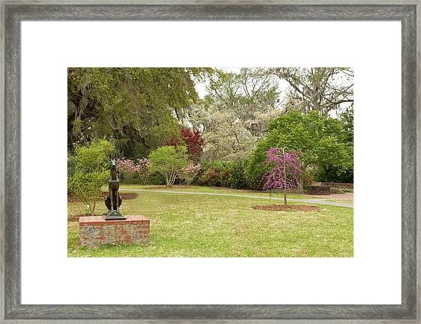 All Kinds Of Dogs Framed Print