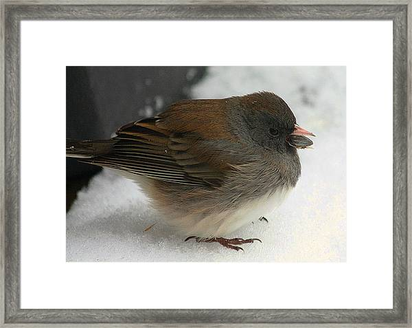 All Puffed Up Framed Print