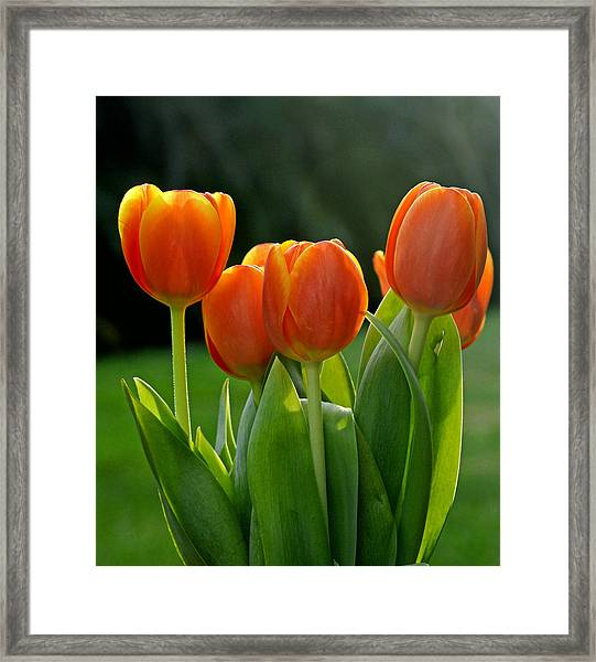 All Together Framed Print