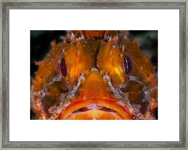 Allow Me To Introduce Myself Framed Print