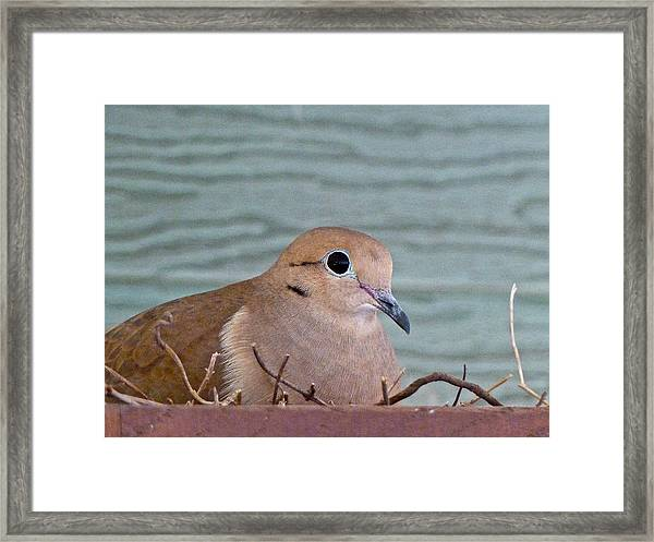 Almost A Mother Framed Print