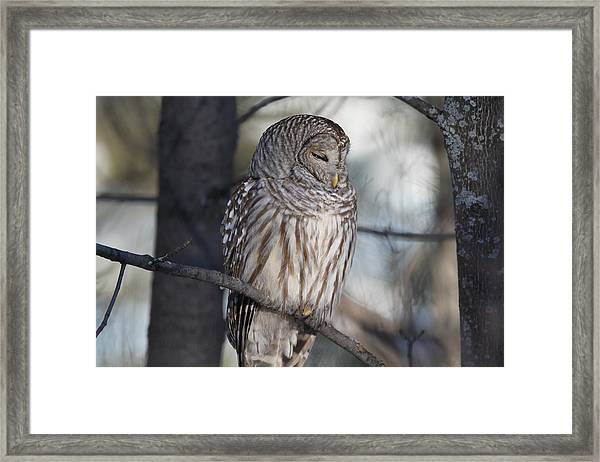 Almost At Rest Framed Print