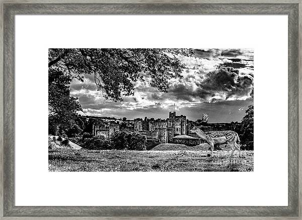 Alnwick Castle And Fallow Deer Framed Print