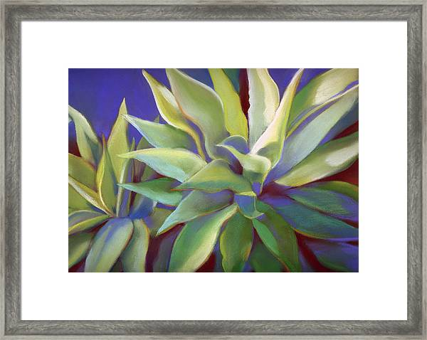 Aloe Plants In Big Sur Framed Print